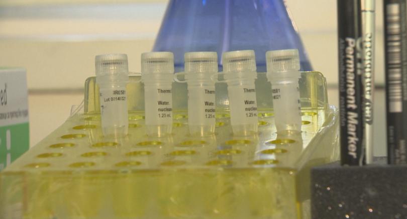 Монтана обявява грипна епидемия от днес. Това е първата област
