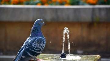 Безплатна вода за справяне с градската жега в София