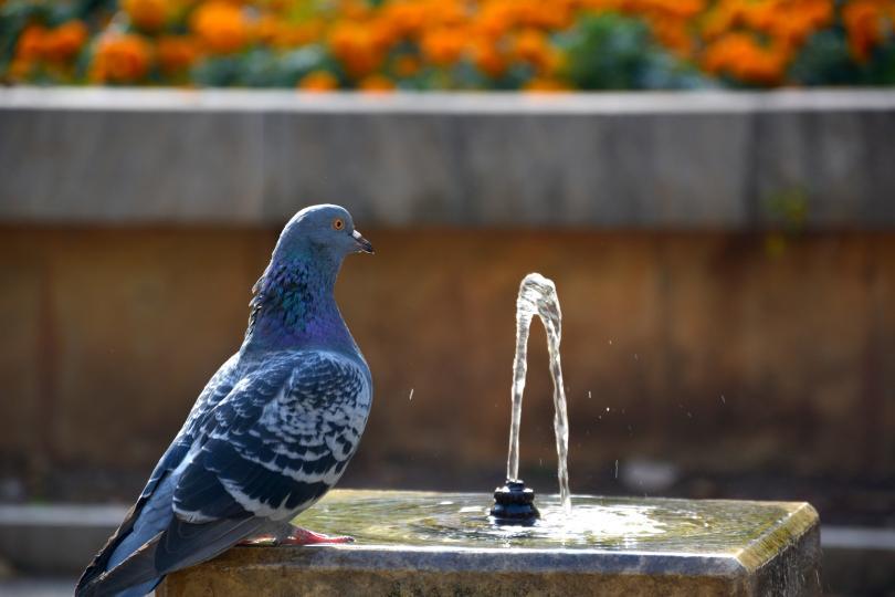 Нетрадиционни методи за справяне с градската жега. Любопитна кампания ще