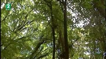 Държавата ще  стопанисва общинските гори във Варненско