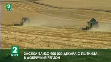Засяха близо 900 000 декара с пшеница в Добричкия регион