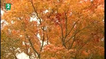 """Кампанията """"Лист по лист"""" спаси 575 дървета"""