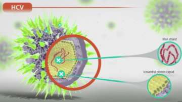 Първи в света - болни с рак на черния дроб излекувани от хепатит С