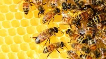 Модерни технологии ще помагат на пчеларите