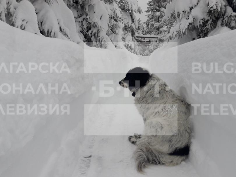 снимка 7 15 души остават блокирани в снежните преспи над Перущица (СНИМКИ/ВИДЕО)