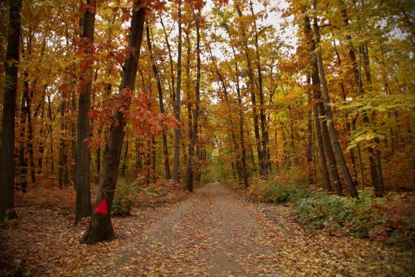 снимка 2 Есента е супер яка (ГАЛЕРИЯ)