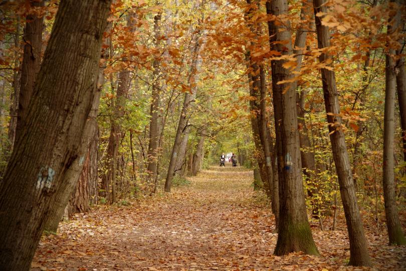 снимка 9 Есента е супер яка (ГАЛЕРИЯ)