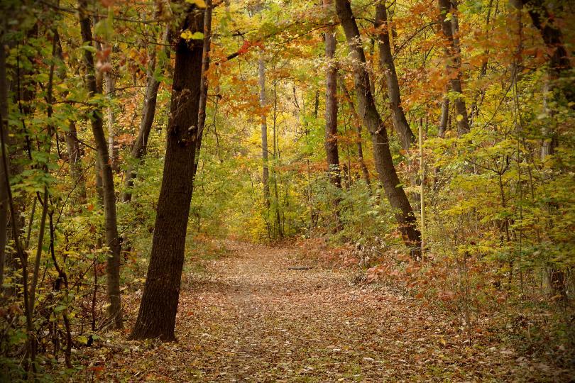 снимка 10 Есента е супер яка (ГАЛЕРИЯ)