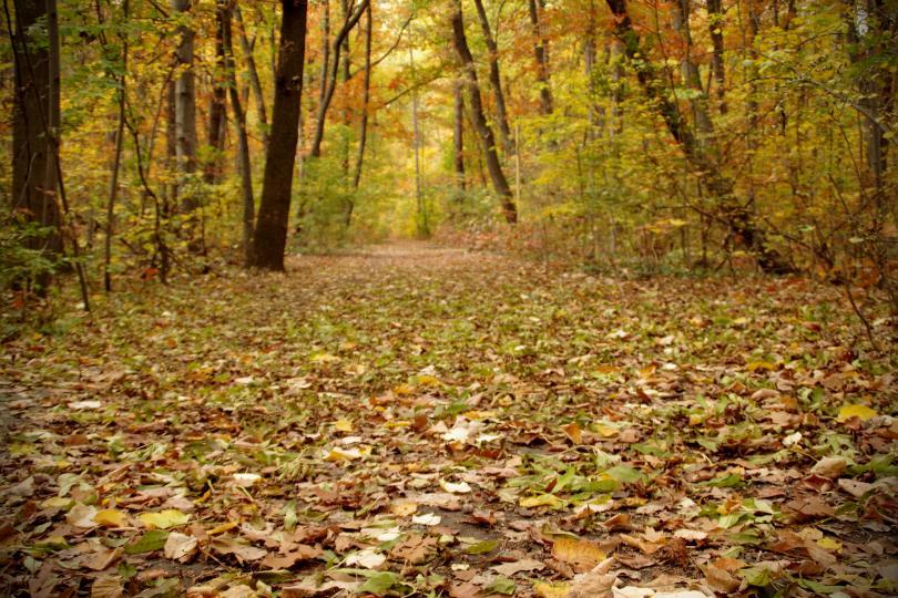снимка 11 Есента е супер яка (ГАЛЕРИЯ)
