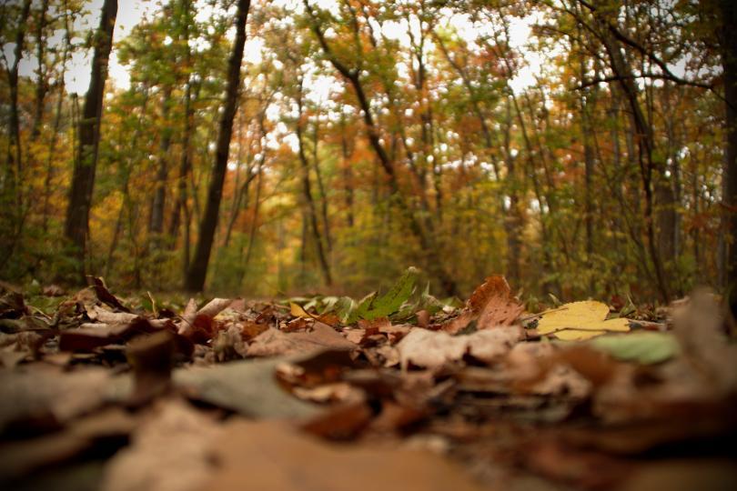 снимка 12 Есента е супер яка (ГАЛЕРИЯ)