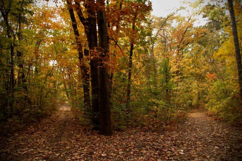 снимка 13 Есента е супер яка (ГАЛЕРИЯ)