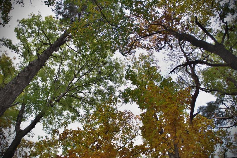 снимка 14 Есента е супер яка (ГАЛЕРИЯ)