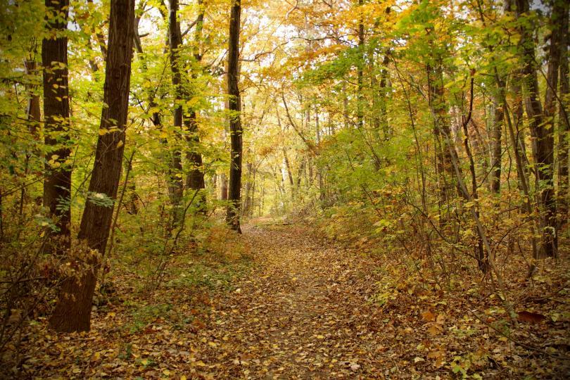 снимка 15 Есента е супер яка (ГАЛЕРИЯ)