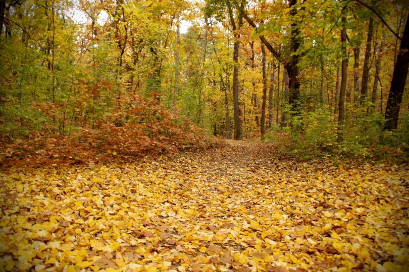 снимка 16 Есента е супер яка (ГАЛЕРИЯ)
