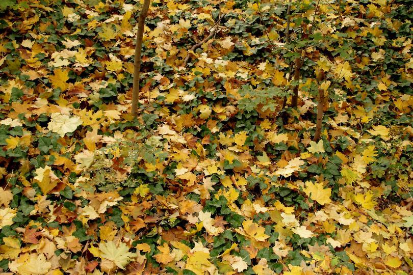 снимка 18 Есента е супер яка (ГАЛЕРИЯ)