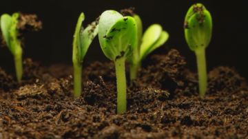 Зелена светлина: Растенията, притежаващи чувства и интелект