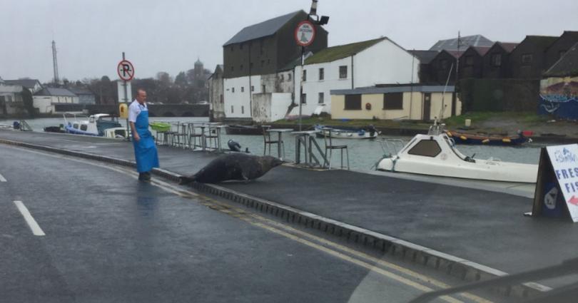 Посетител на ирландски град направи снимка как местната знаменитост -