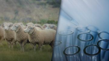 Започна вземането на втори проби от животни в Болярово