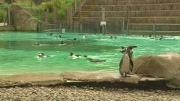 Броят животните в Лондонския зоопарк