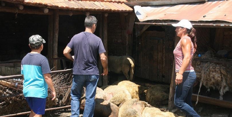 Оперативният щаб въвежда три спешни мерки за борба с чумата по животните