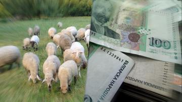 Порожанов свиква Съвета по животновъдство