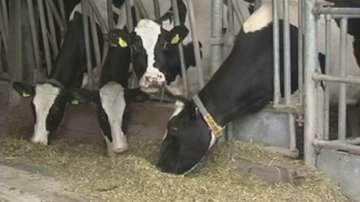 """Фонд """"Земеделие"""" изплати близо 112 млн. лв субсидии на животновъдите"""