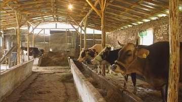 Започна изплащането на първия транш субсидии за животновъди