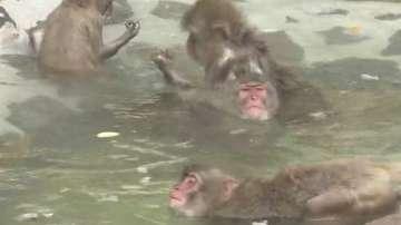 Горещи бани за маймуните в Япония