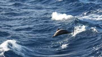 По-малко мъртви делфини са открити по Черноморието