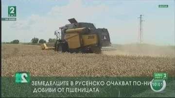 Русенските земеделци очакват по-ниски добиви на пшеница, но на по-добра цена