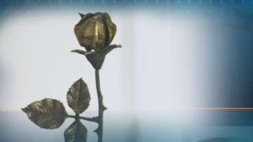 Раздадоха наградите Жълта роза
