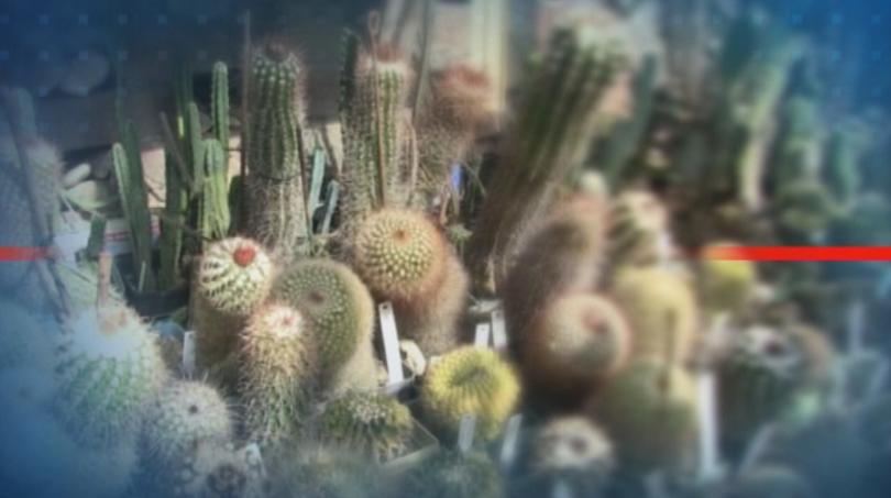 Първата по рода си ферма за кактуси се намира в