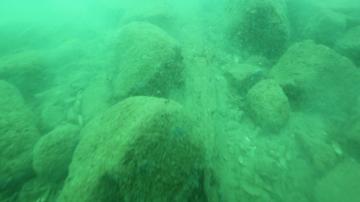 38 години по-късно: Започват нови изследвания на каменната гора край Созопол