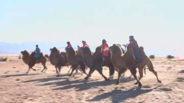 Състезание с камили в Северен Китай