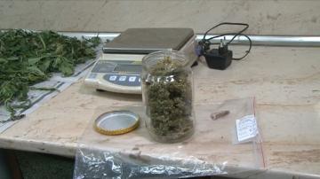 Рекордно количество канабис беше заловено в Бургаско