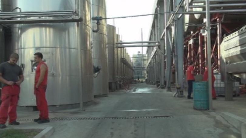 От днес фабриката за приемане на грозде и производство на