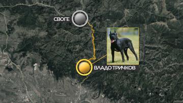 Задържан е собственикът на кучетата, нахапали смъртоносно 39-годишен мъж