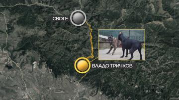 Пет домашни кучета нахапаха до смърт 39-годишен мъж край с. Владо Тричков
