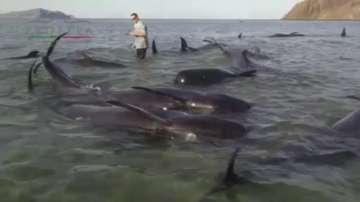 Япония настоява да отпадне забраната за лов на китове