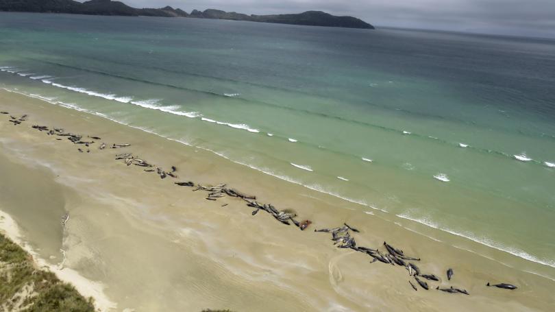 Водата изхвърли на брега на остров Стюарт телата на 145