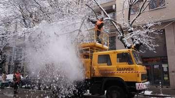 Счупен клон спря движението на трамваите по ул. Пиротска