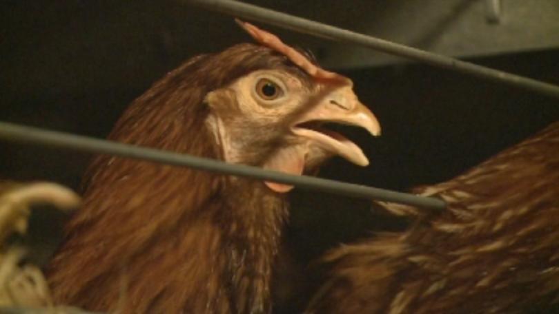 оман отмени забраната внос пилешко българия полша