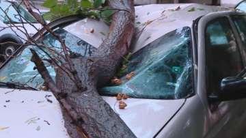 Дърво падна върху две коли в центъра на Пловдив