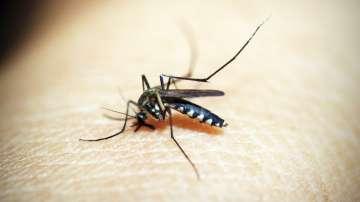 Засега у нас няма заразени от западнонилска треска