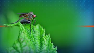 Започва самолетното пръскане срещу комари в Дунавските общини