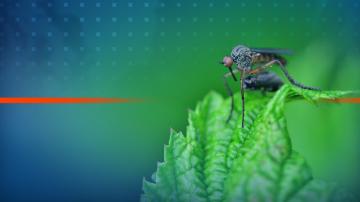 Пръскането срещу комари по Дунав се отлага