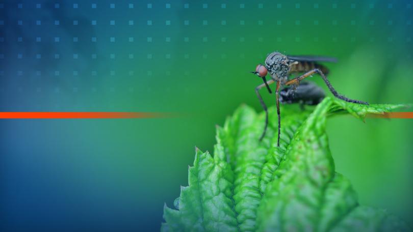 2 млн. лв. отпуска държавата за борба с комарите по