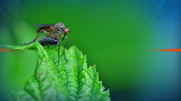 Пръскането срещу комари по Дунав започва в петък