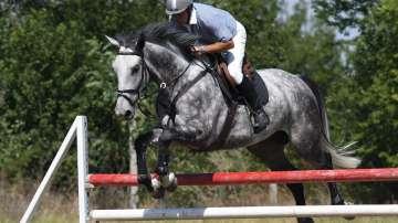 Местят конната база от Борисовата градина в София