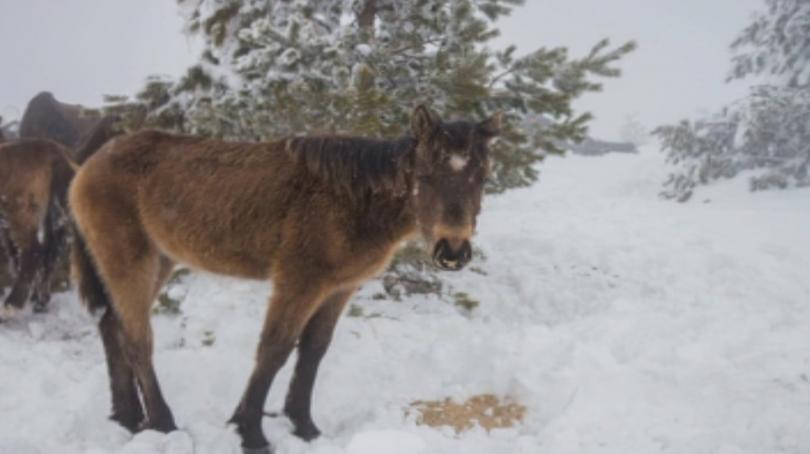 Прокуратурата разследва случая с мъртвите коне в Осоговската планина